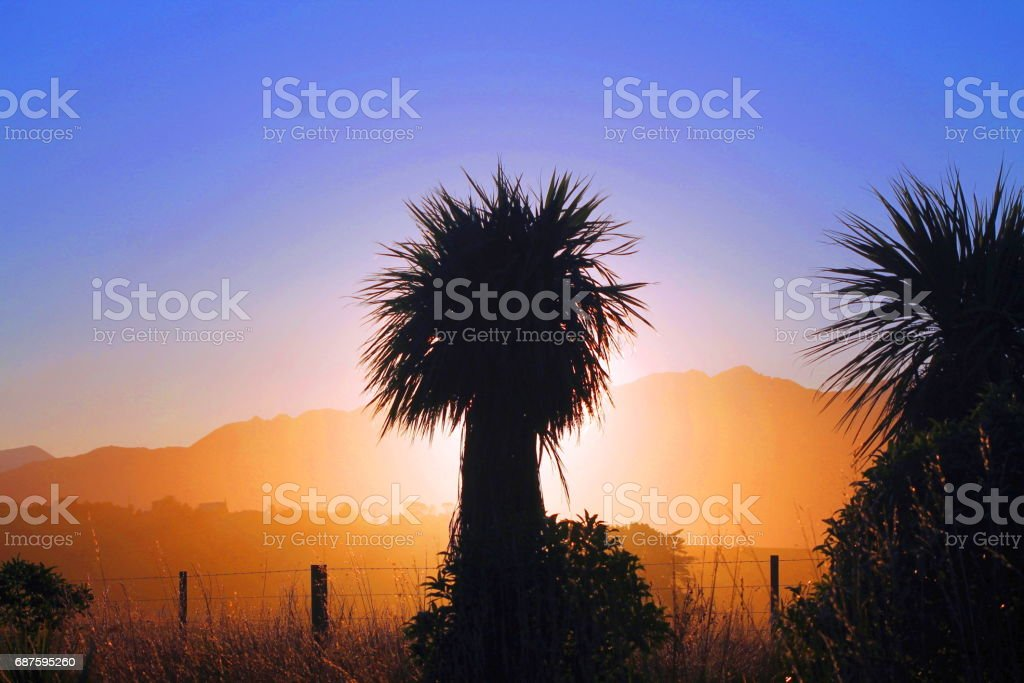 Sunset behind a palm tree stock photo