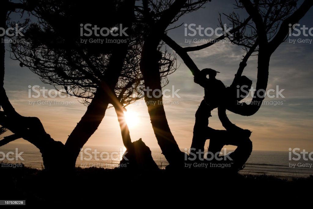 Sunset behind a Twisted Tree stock photo