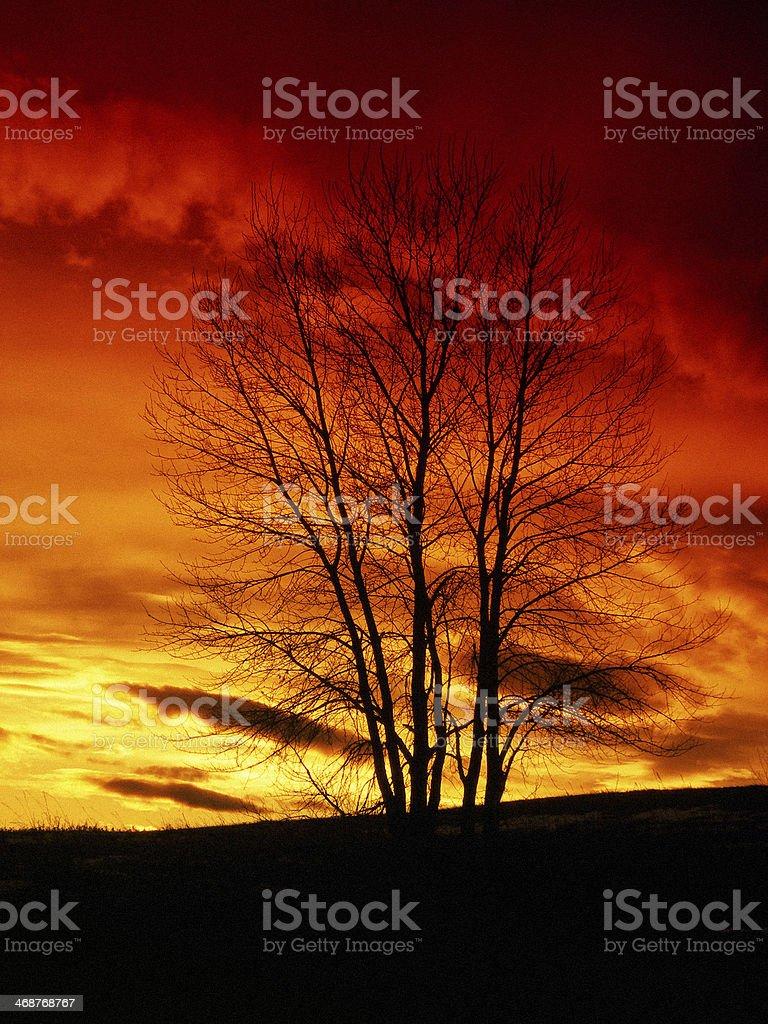 Sunset Behind Bare Tree royalty-free stock photo
