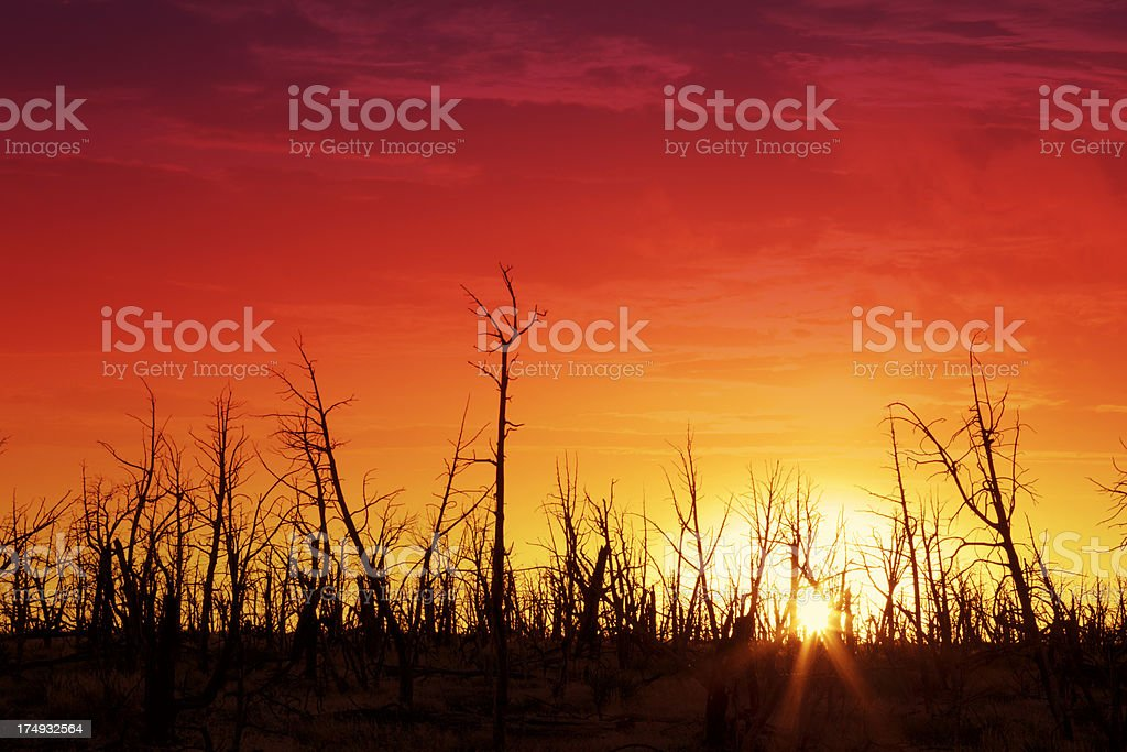 Sunset Behind Bare Trees royalty-free stock photo