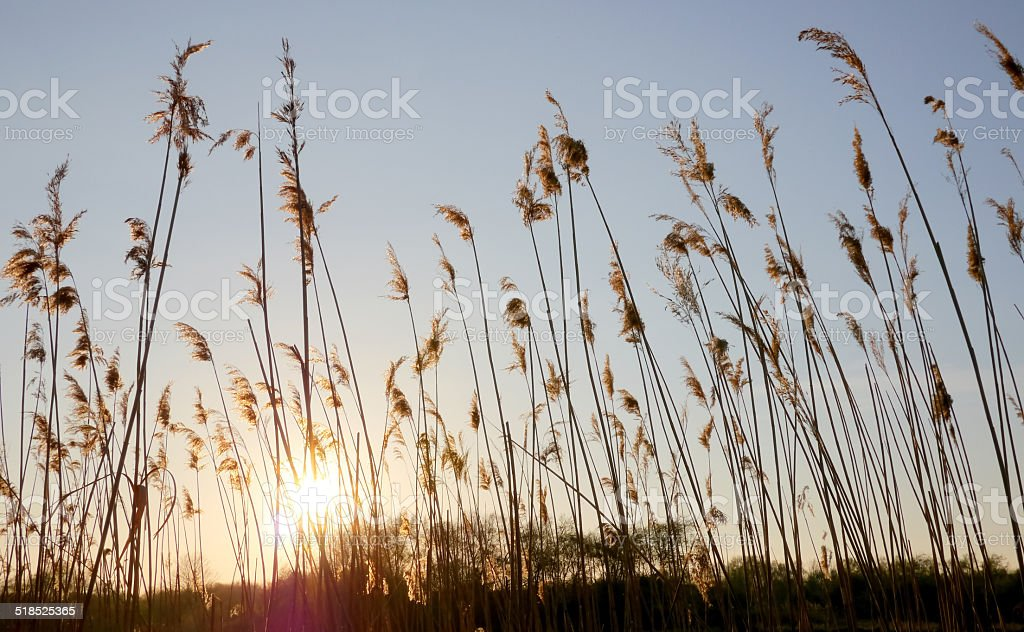 Sunset behind grass royalty-free stock photo