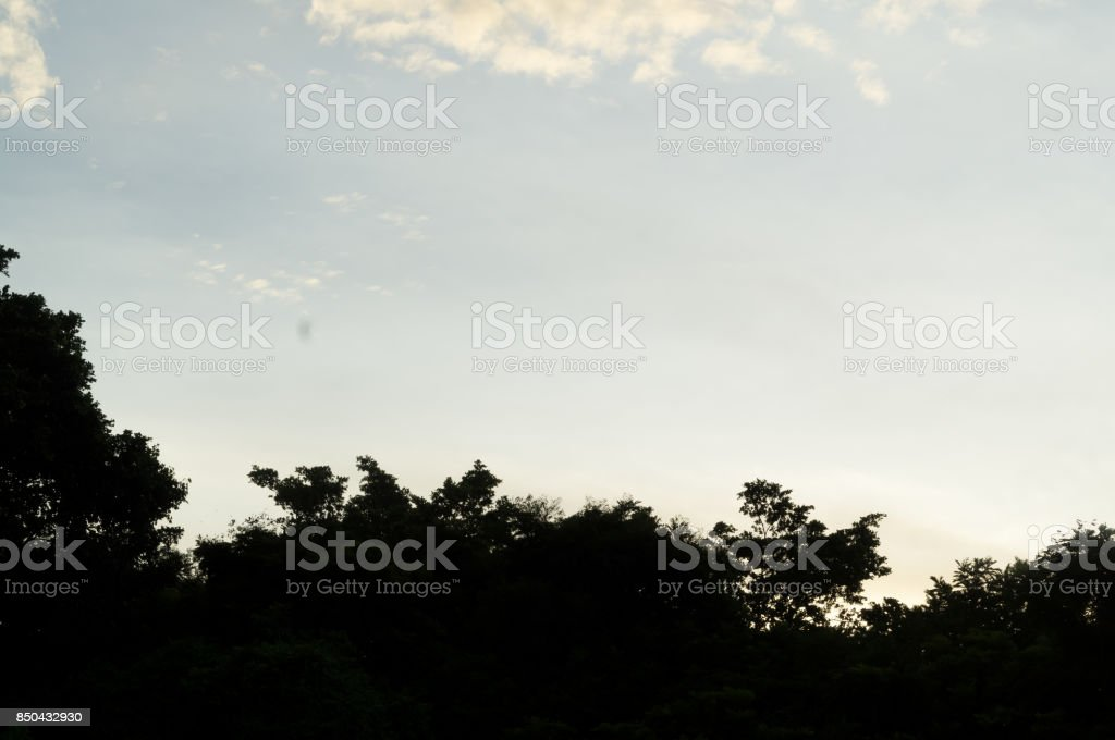 Sunset behind the forest stock photo