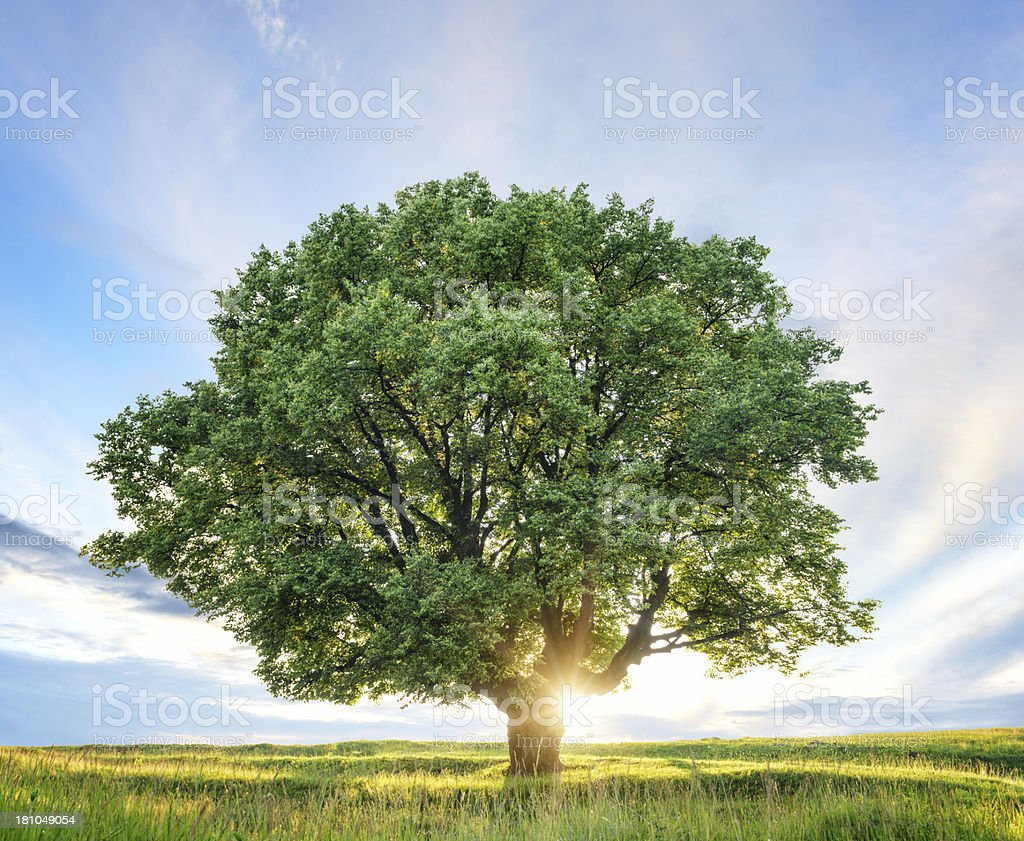 Sunset behind tree royalty-free stock photo