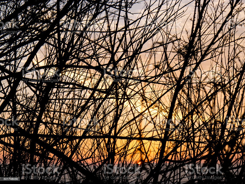 Sunset behind twigs silhouette stock photo