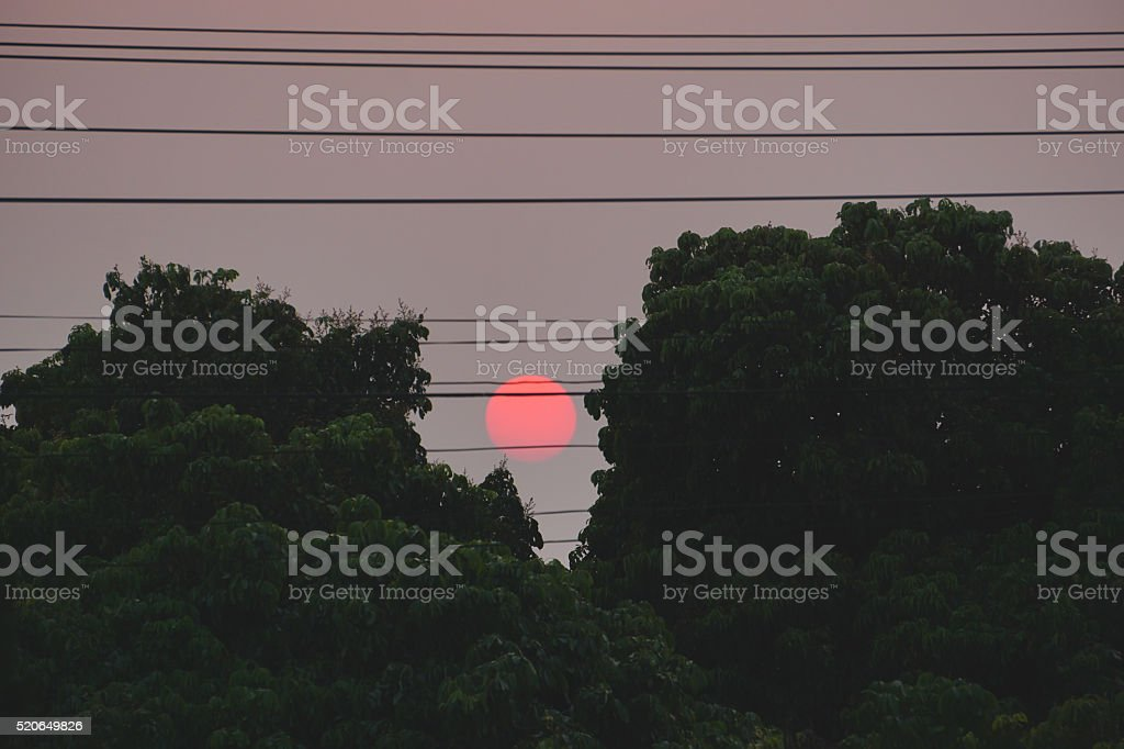 Sunset between tree royalty-free stock photo