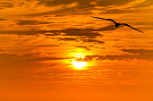 Sunset Bird Flying Silhouette