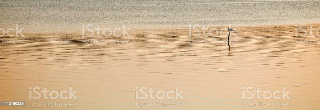 sunset bird stock photo