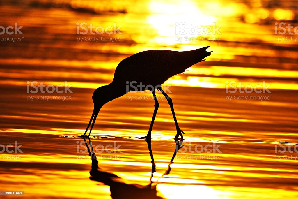 Sunset bird stock photo