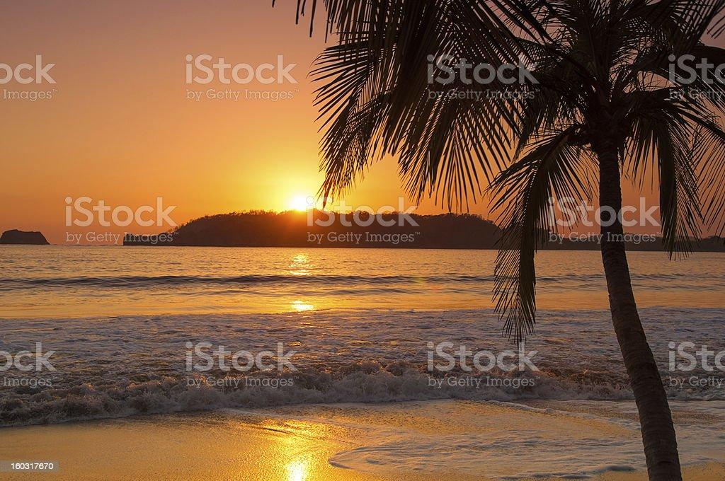 Sunset by palm tree on beach stock photo