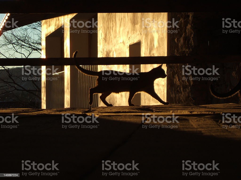 Sunset cat royalty-free stock photo