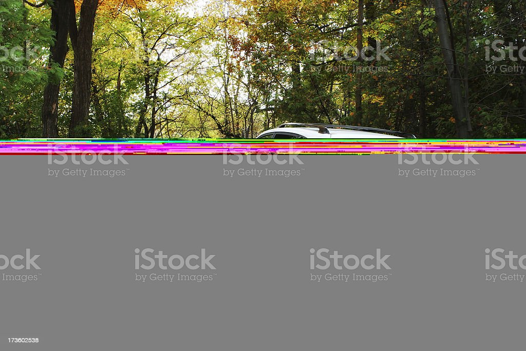 A sunset coming through the trees in a forest stock photo