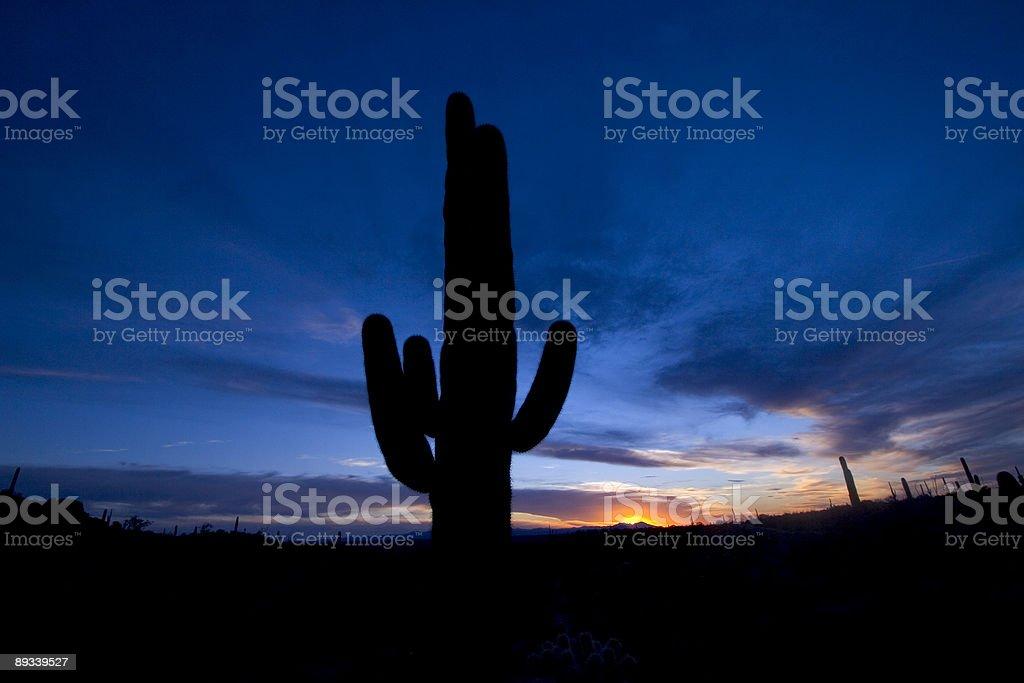 Sunset Desert stock photo