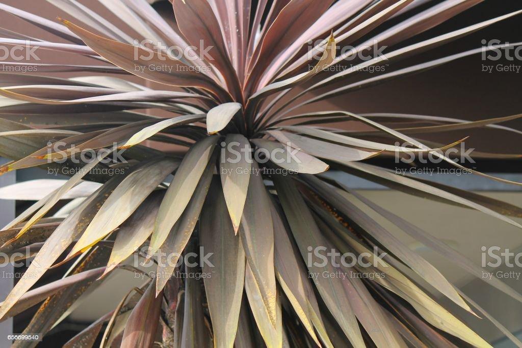 Sunset Desert Plant stock photo