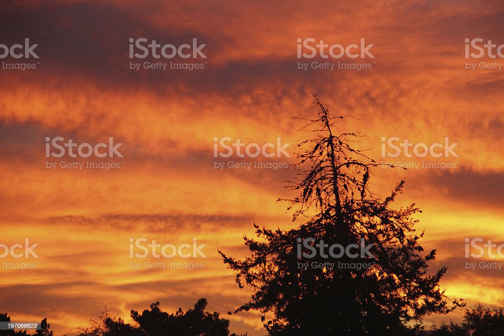 Sunset Dramatic Silhoutte Orange royalty-free stock photo