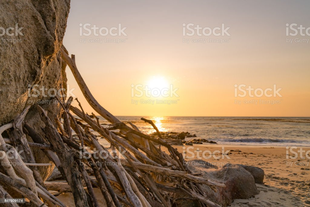 Sunset driftwood stock photo