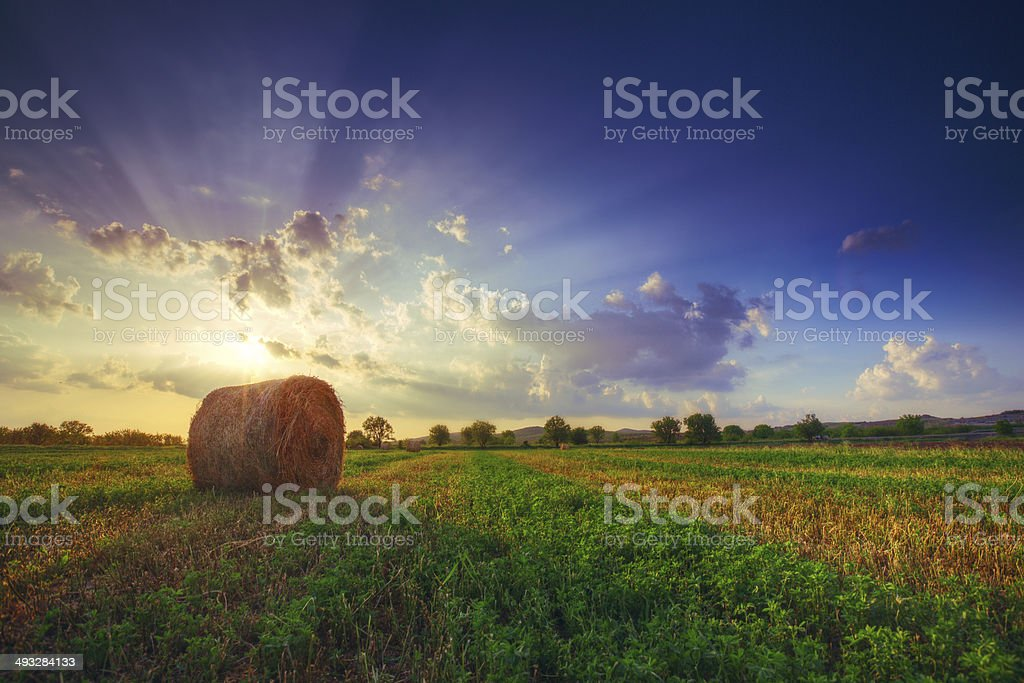 Sunset field, tree and hay bale made by HDR stock photo