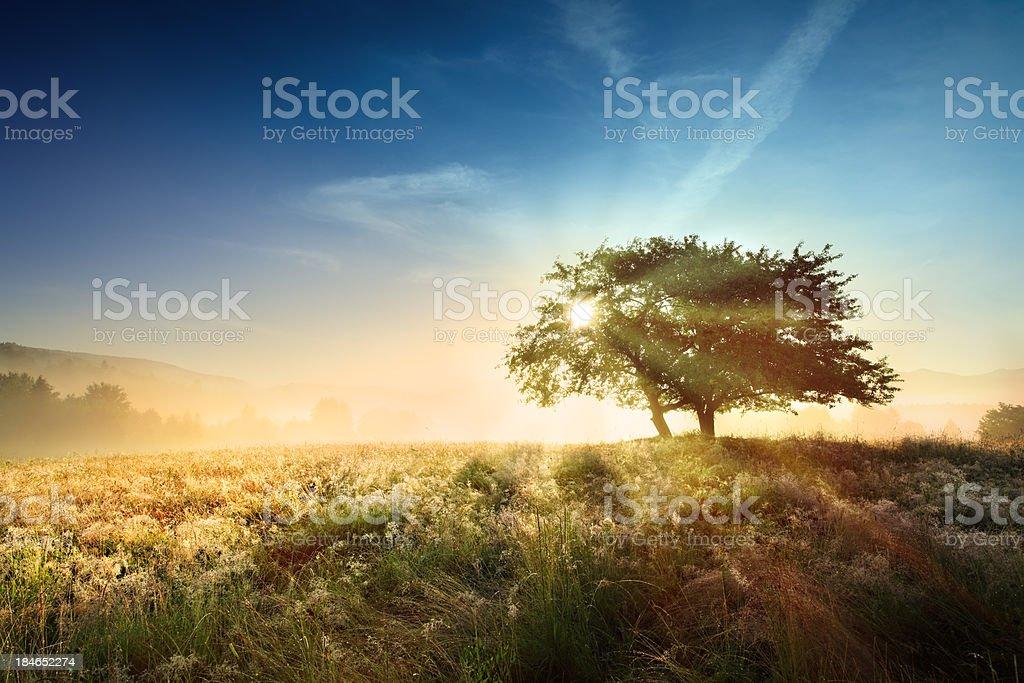 Sunset Foggy Landscape - Sun Shining through the Tree royalty-free stock photo