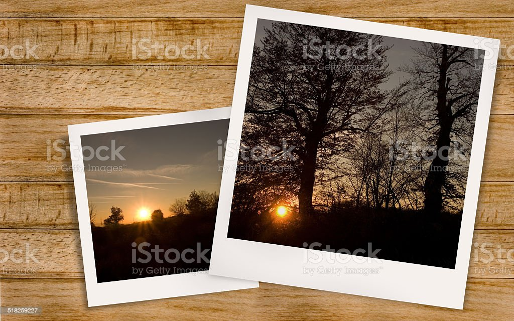 Sunset forest stock photo