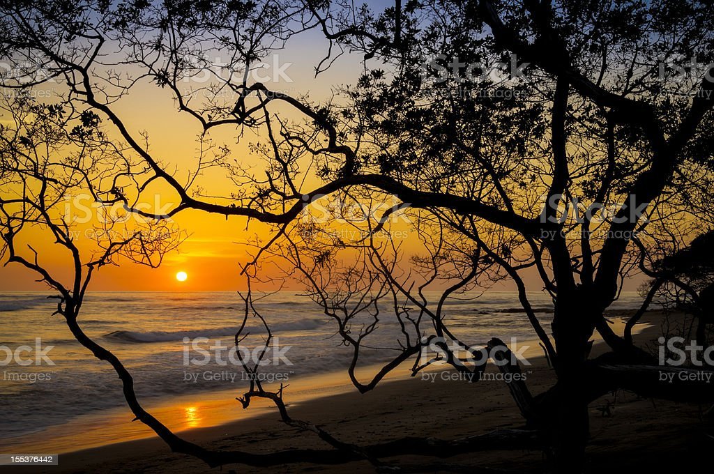 Sunset framed by twisted tree branches royalty-free stock photo