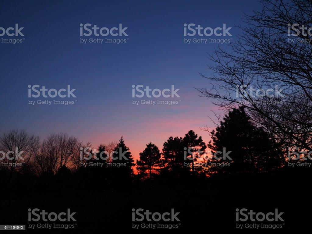Sunset glow behind evergreens stock photo