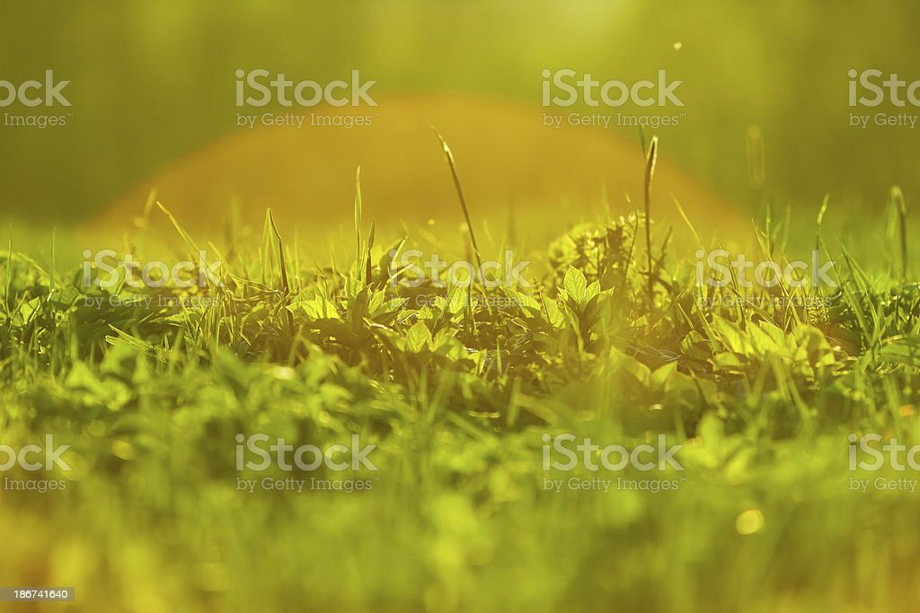 Sunset grass background royalty-free stock photo