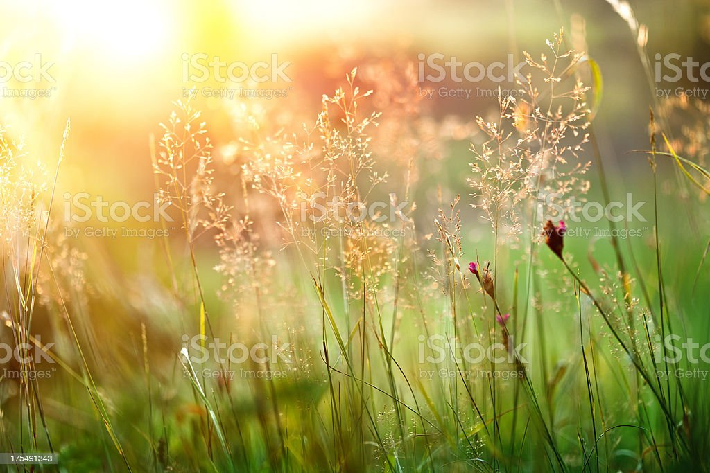Sunset grass stock photo