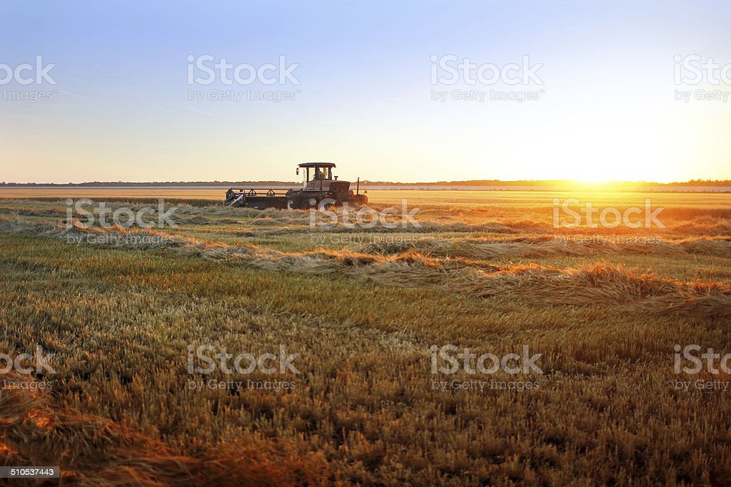 Sunset Harvest stock photo