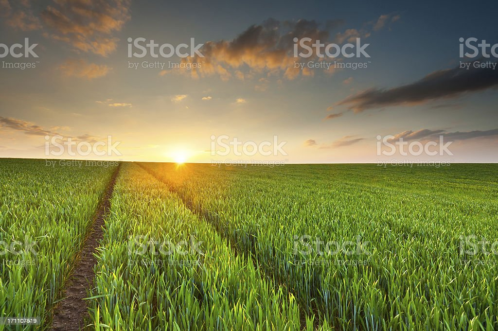 Sunset illuminates a green crop field stock photo