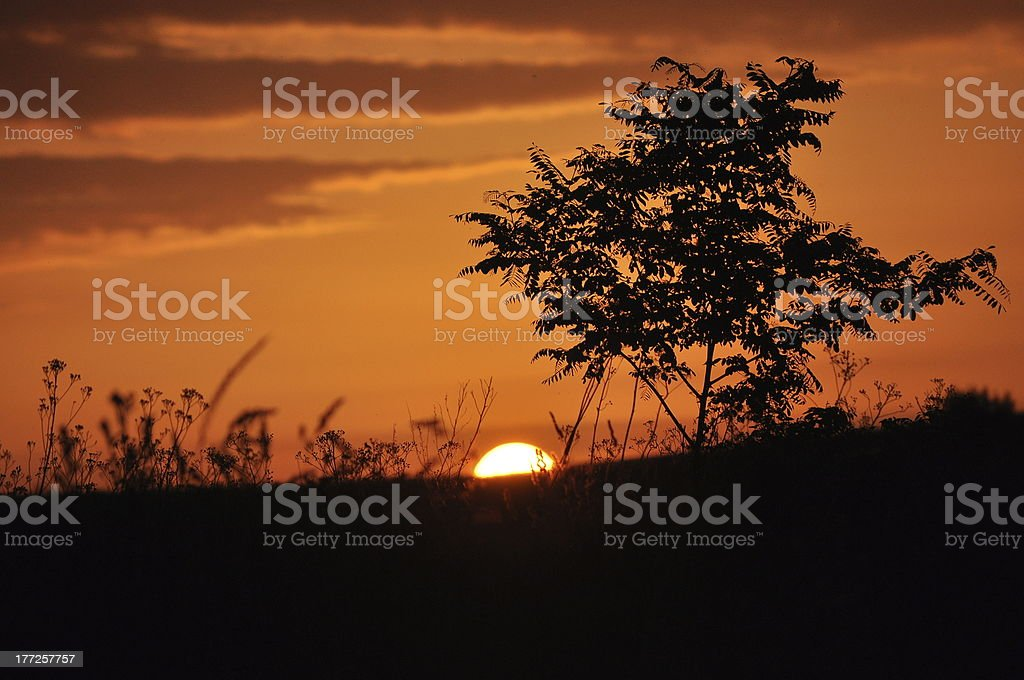 Sunset in a field royalty-free stock photo