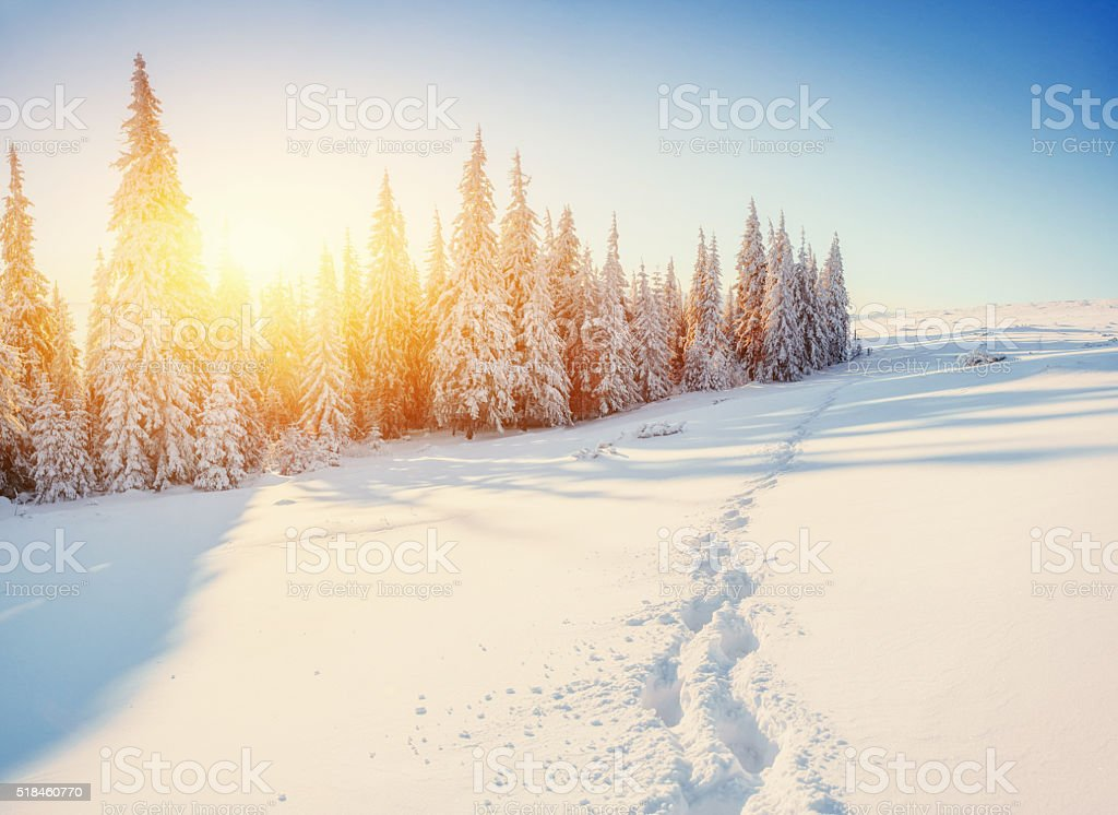 Sunset. In anticipation of the holiday. Carpathian, stock photo