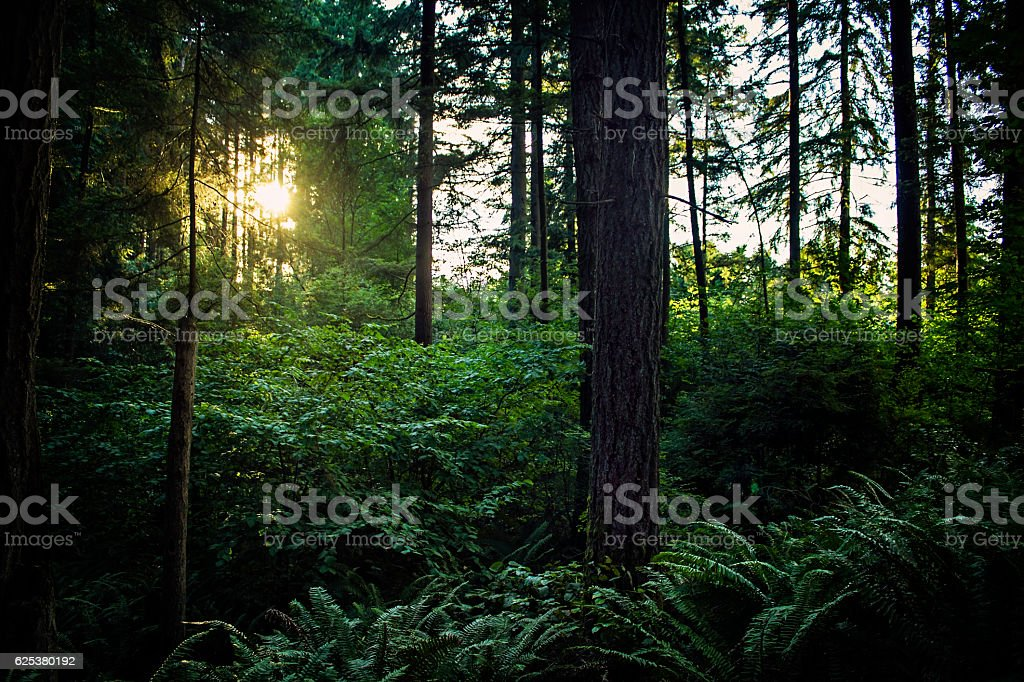 Sunset in Beautiful Green Forest royalty-free stock photo