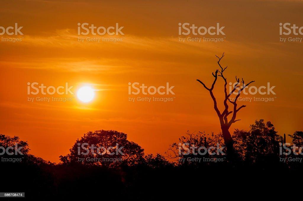 sunset in Brazil stock photo