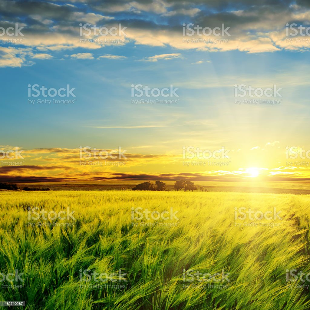 sunset in clouds over green field stock photo