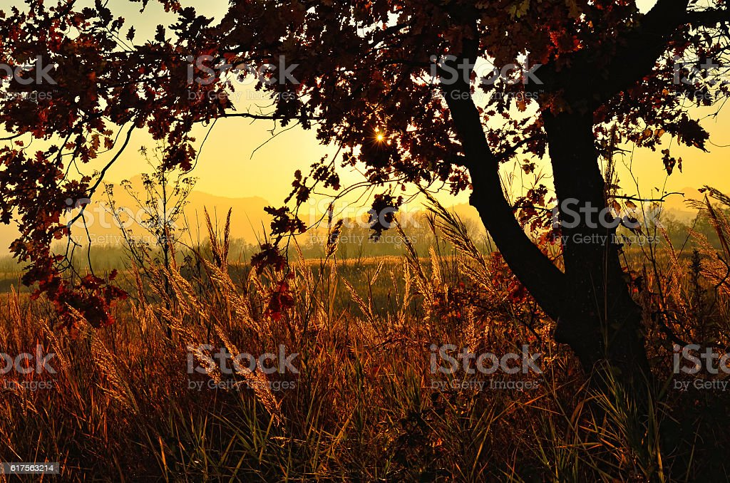 sunset in countryside royalty-free stock photo