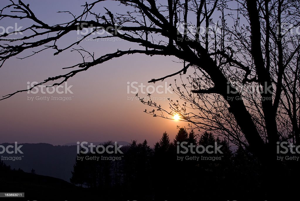 Sunset in Germany through tree royalty-free stock photo