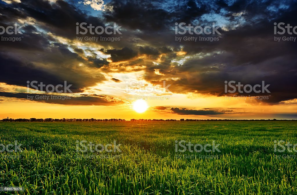 sunset in green field, summer landscape, bright colorful sky stock photo