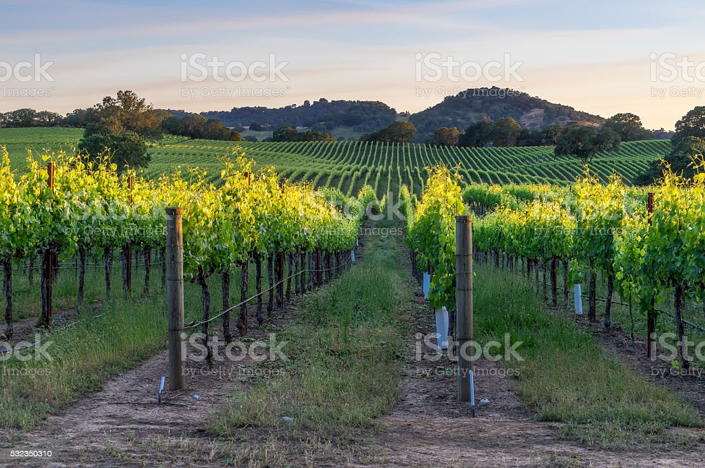 Sunset in Healdsburg, California stock photo