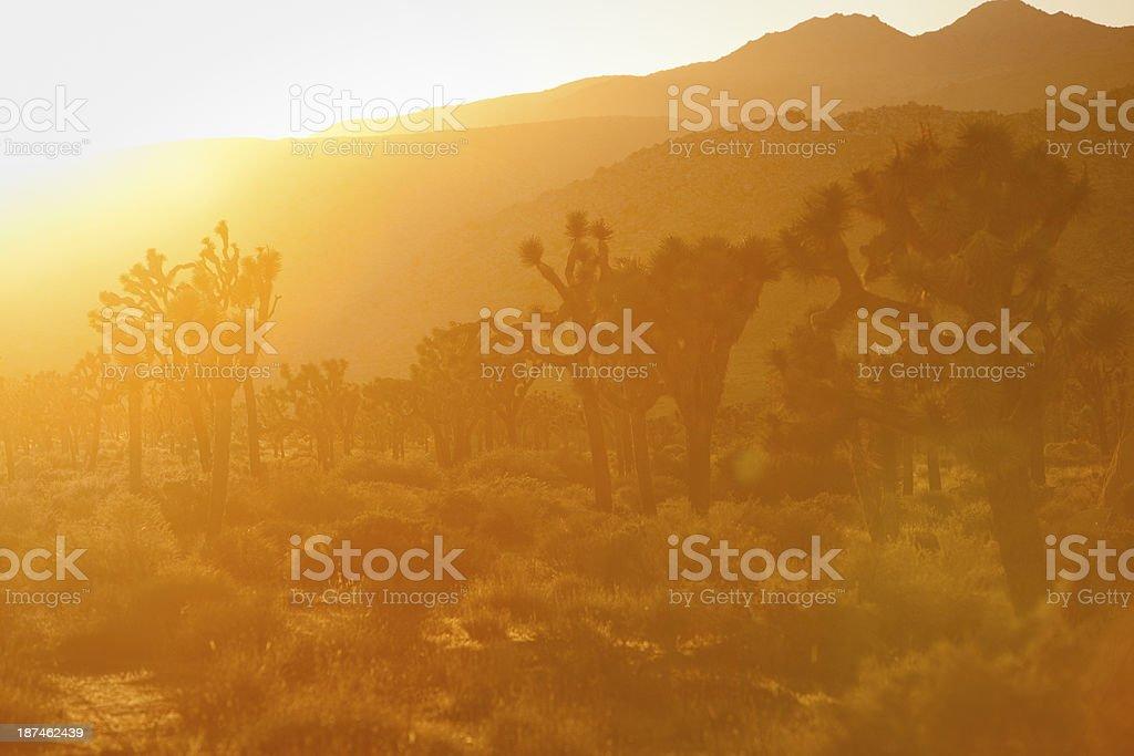 Sunset in Joshua Tree National Park California royalty-free stock photo