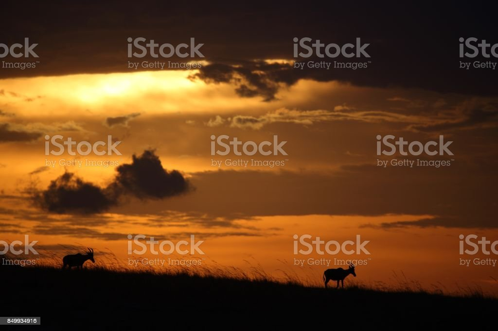 sunset in mara with topi stock photo