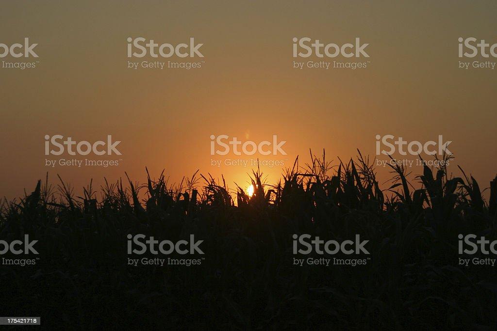Sunset in Nebraska stock photo