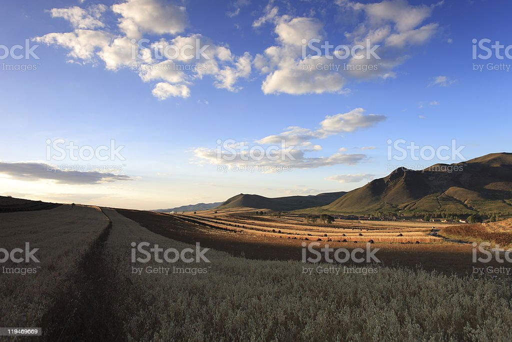 Sunset in Oats Field stock photo