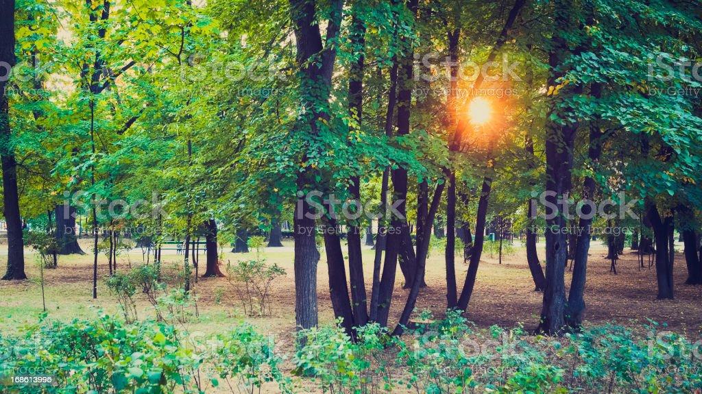 Sunset in park stock photo