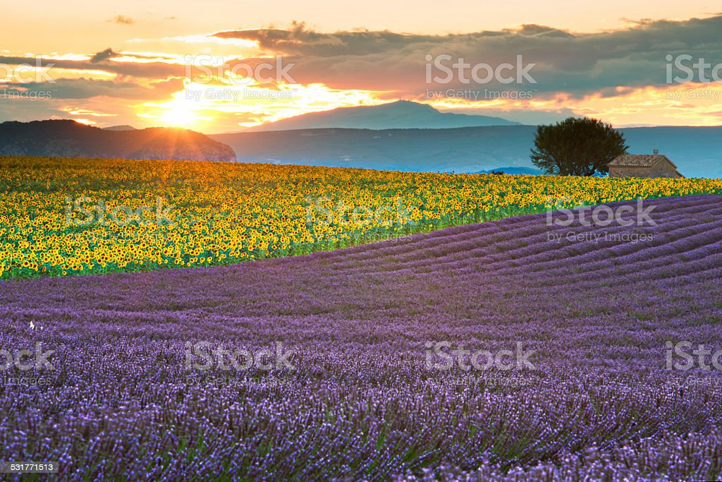 Sunset in Provence stock photo