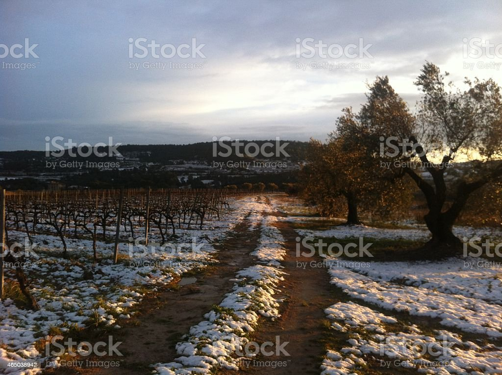 Sunset in snowed wineries stock photo