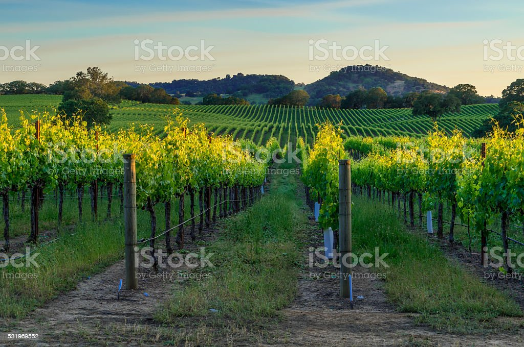 Sunset in Sonoma stock photo