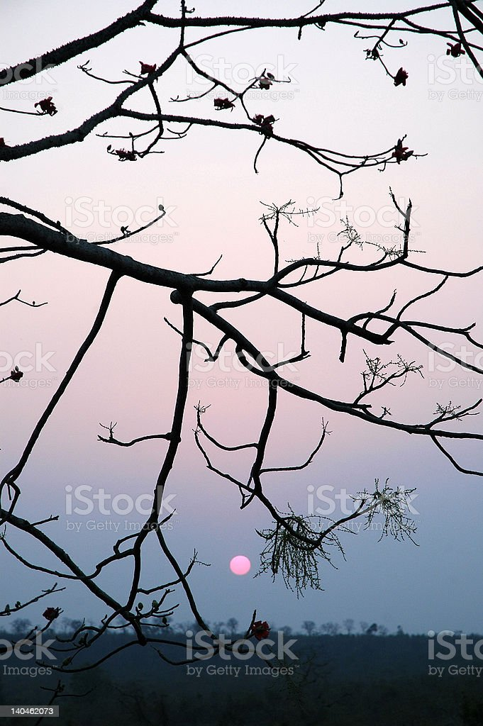Sunset in South India stock photo
