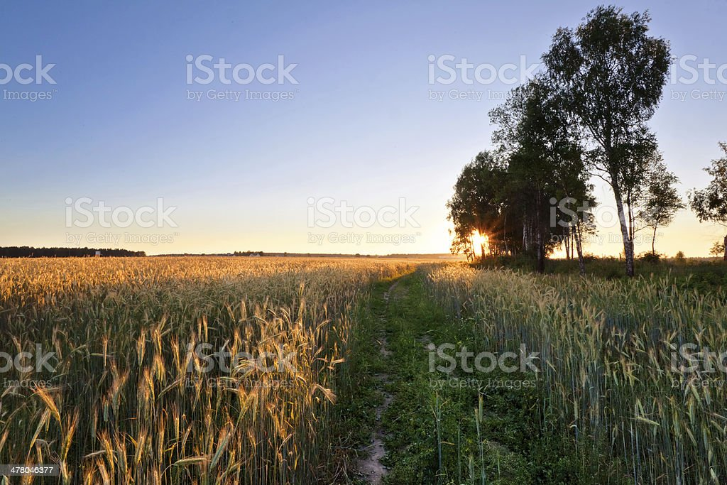 Sunset in summer field royalty-free stock photo