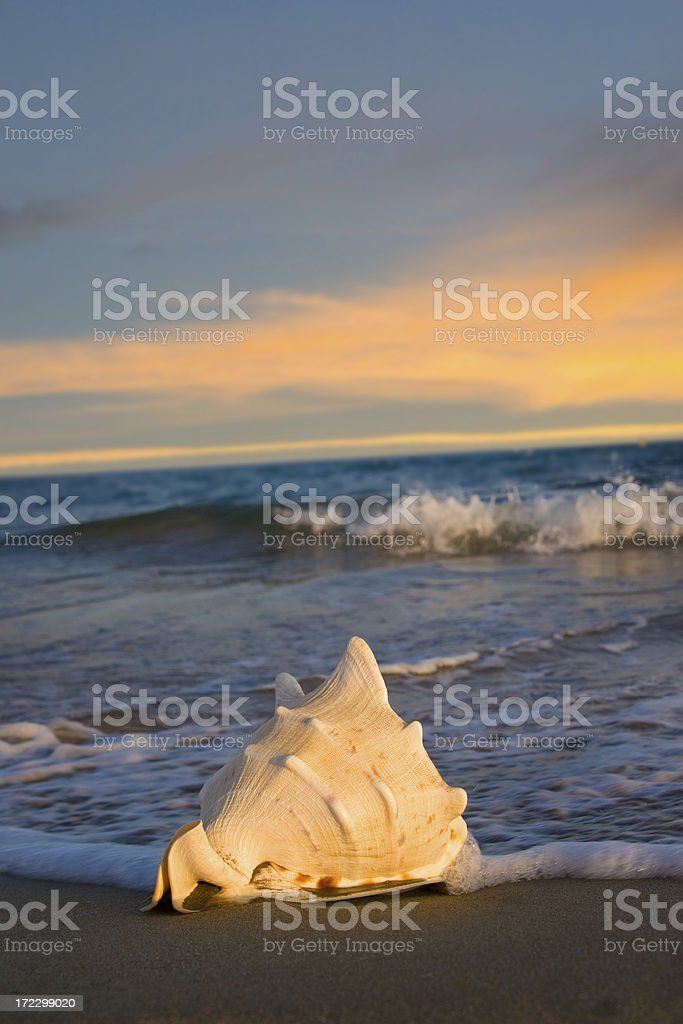 Sunset in the beach royalty-free stock photo