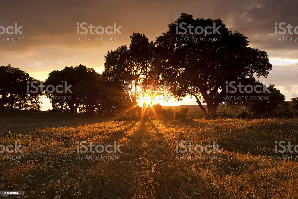 Sunset in the field stock photo