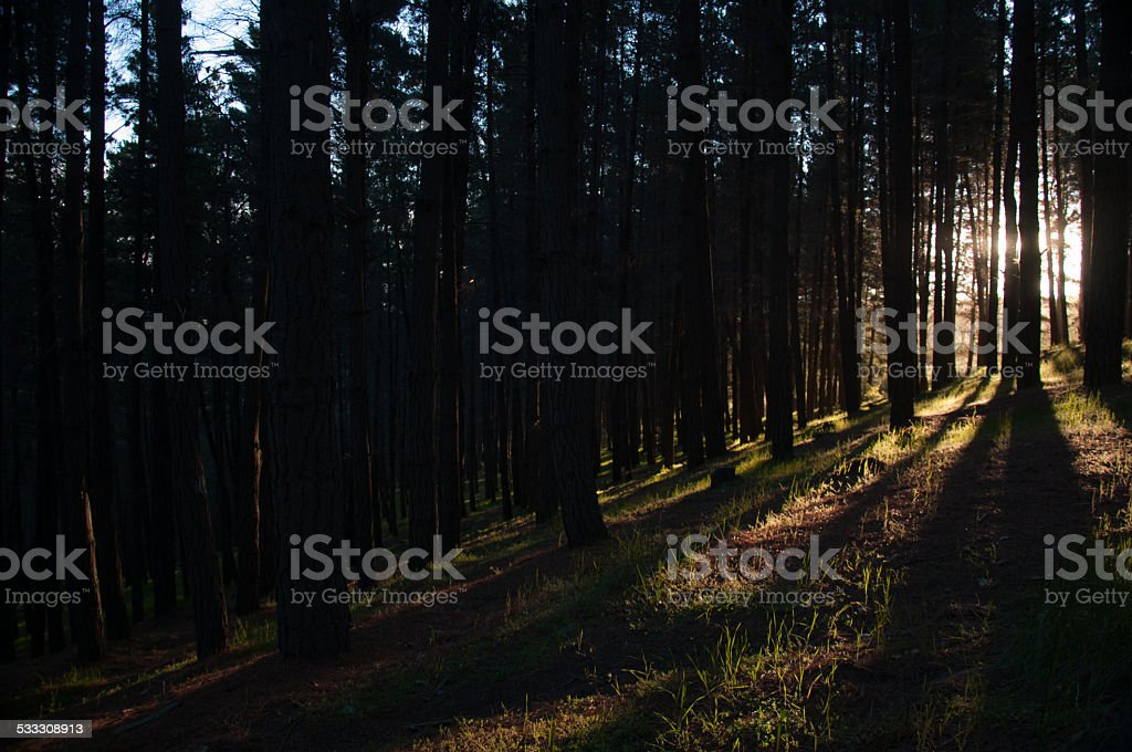 sunset in the forest in esquel argentina stock photo